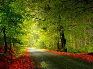 Sharía, el camino de los Profetas