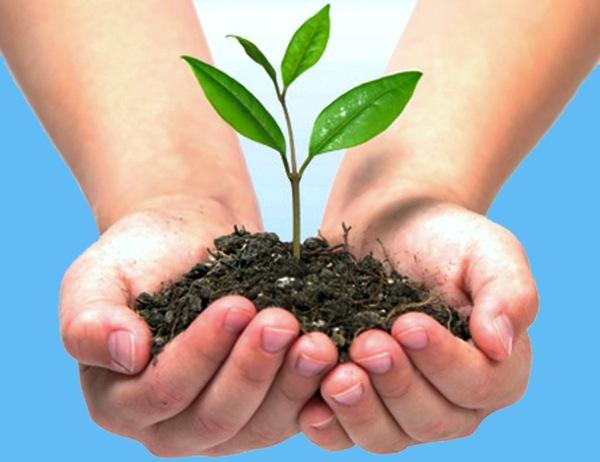 Las enseñanzas de Muhammad para preservar el Medio Ambiente