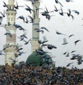 7 signos de que realmente amas al Mensajero de Allah