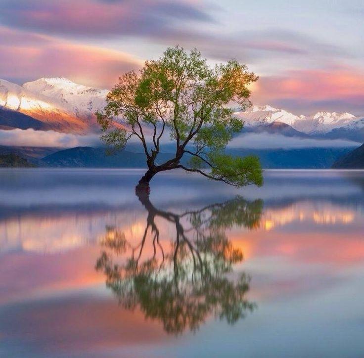 La conciencia es un reflejo del estado del corazón y la mente
