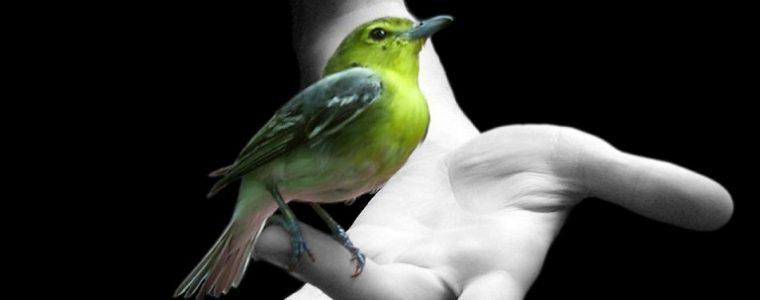 Confiar en Allah es ser como los pájaro, que por la mañana dejan el nido con hambre y al atardecer vuelven saciado