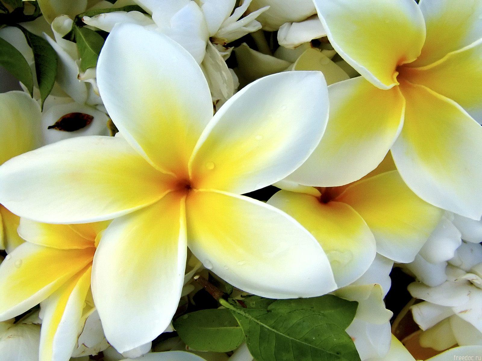 white_yellow_flowers-normal