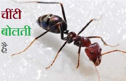 चींटी बोलती है