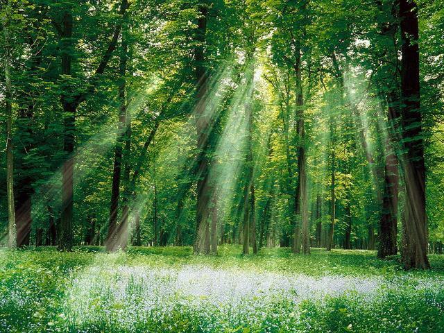 truthfulness-nature-trees