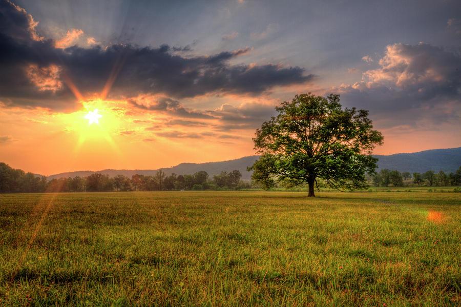 sun_nature_field