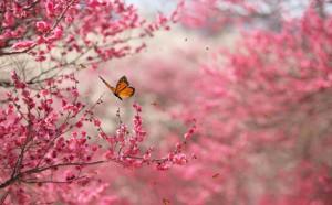 life nature-flower