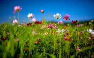 flowers-nature