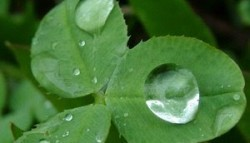 Ramadan: Raining with Mercy