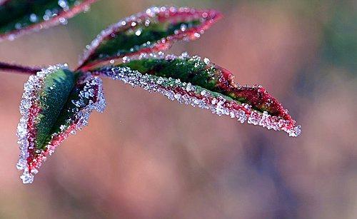 leaf_nature