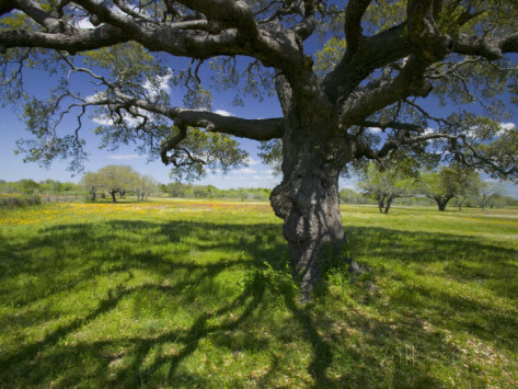 deep-rooted tree