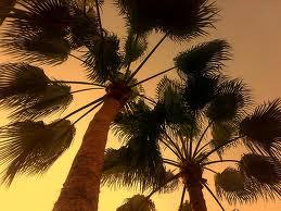 palm trees-yathrib