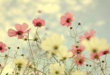 15 Daily Supplications & Etiquettes Islam Teaches Uu