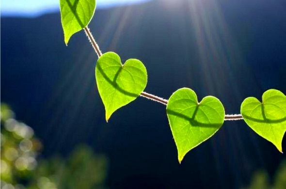 How to Treat Our Hearts and Develop Sound Belief
